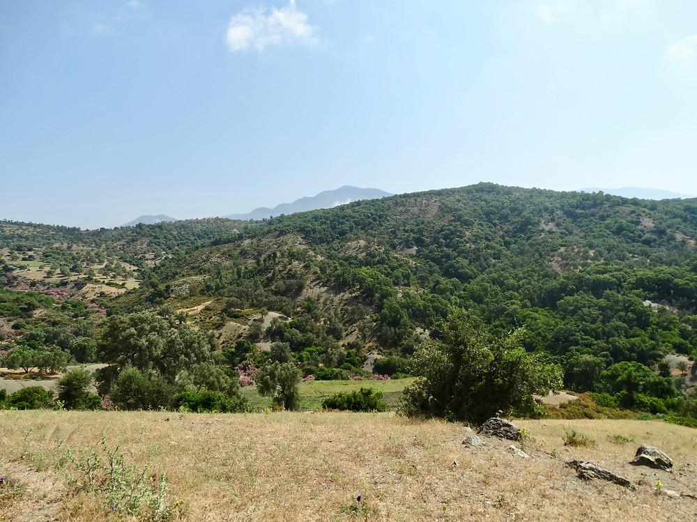 Paysage près de Ouazzane, lauriers-roses, Rif, Maroc
