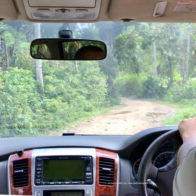 Sur la route menant au site de Mangapwani. On est en pleine forêt.