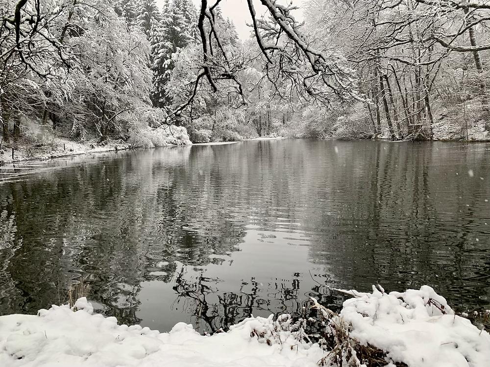 Magnifique paysage enneigé sur les bords des étangs de la piscicuture de Mirwart, dans la Grande Forêt de Saint Hubert. Copyright Carine Goffin Lion pour The traveling Lions