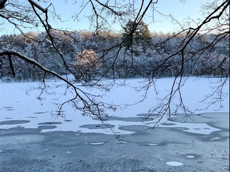 une petite ile au milieu d'un etang gele, a bastogne, dans les ardennes belges