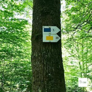 Balisage de la promenade du Ninglinspo - rectangle bleu-promenade 21