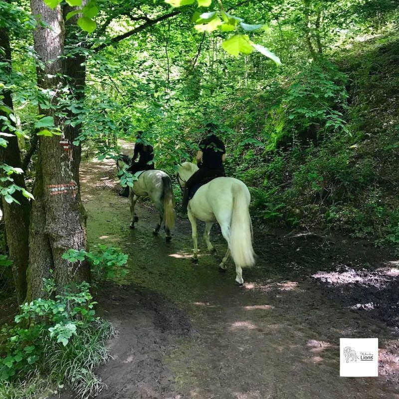 Chevaux en promenade dans les bpois de la vallée du Ninglinspo  à Remouchamps (Nonceveux), près d'Aywaille