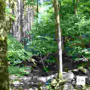 Bois de la vallée du Ninglinspo, Nonceveux