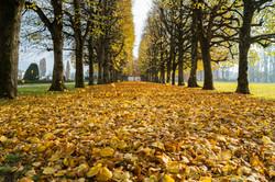 Blätterparadies