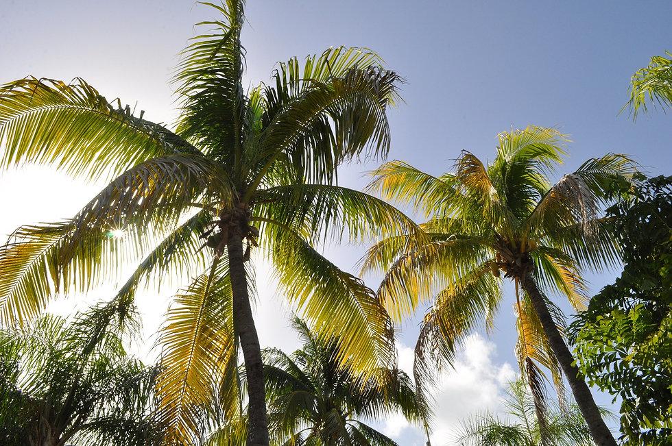 coconut-trees-1172459_1920.jpg