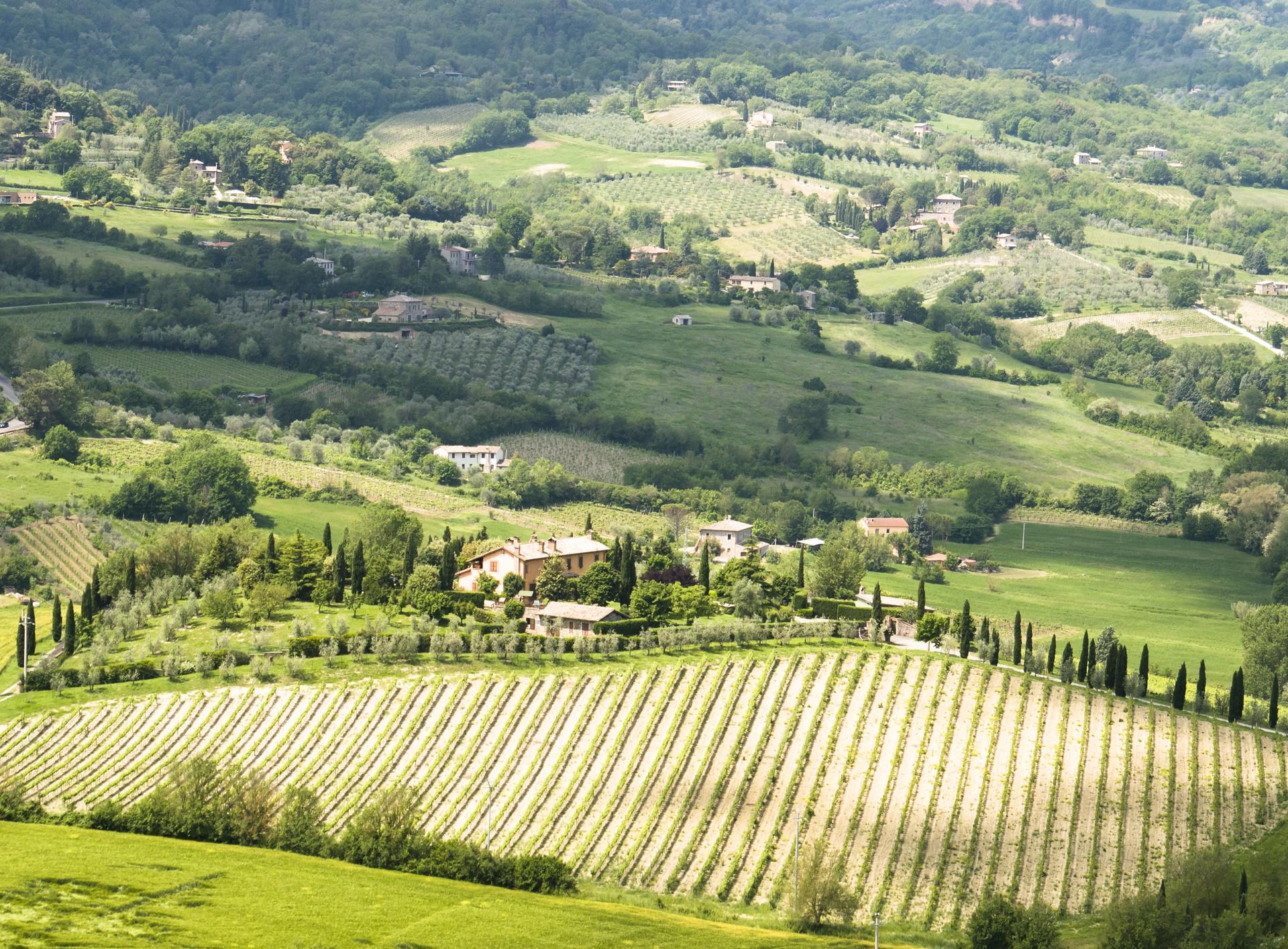 Rolling Hills of Umbria