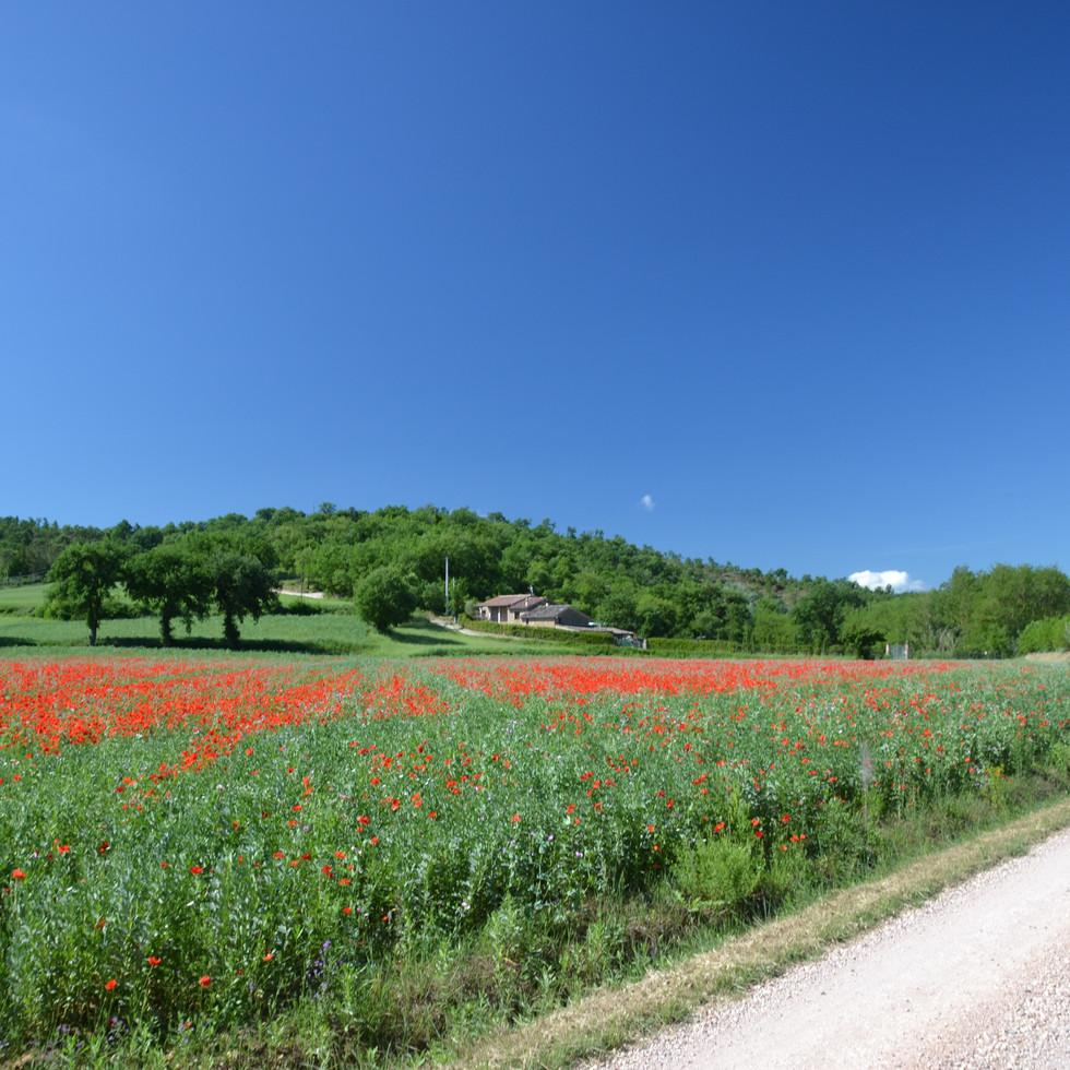 Casa Nestore In The Springtime