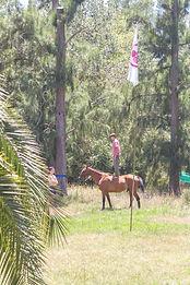 arbol del sur, caballos