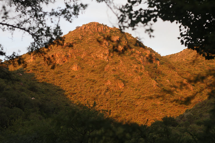 Reserva Natural Arbol del Sur