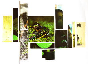 Frog Portfolio