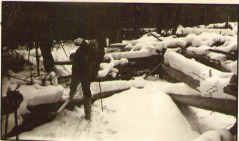 Бурелом в устье руч. Ледниковый — Туристический поход в район хребта Дуссе-Алинь 1986 год — Блог Сергея Чеботова