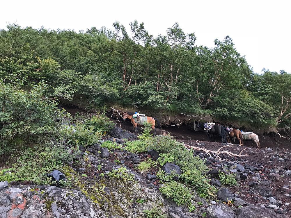 Лошади ждут туристов.