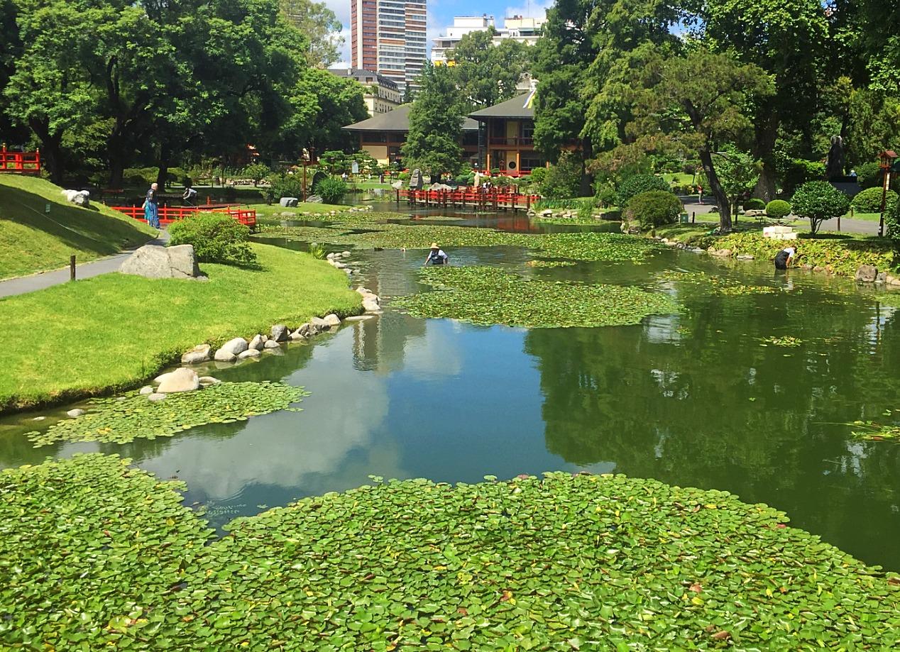 Японский сад в Буэнос-Айресе — Блог Сергея Чеботова