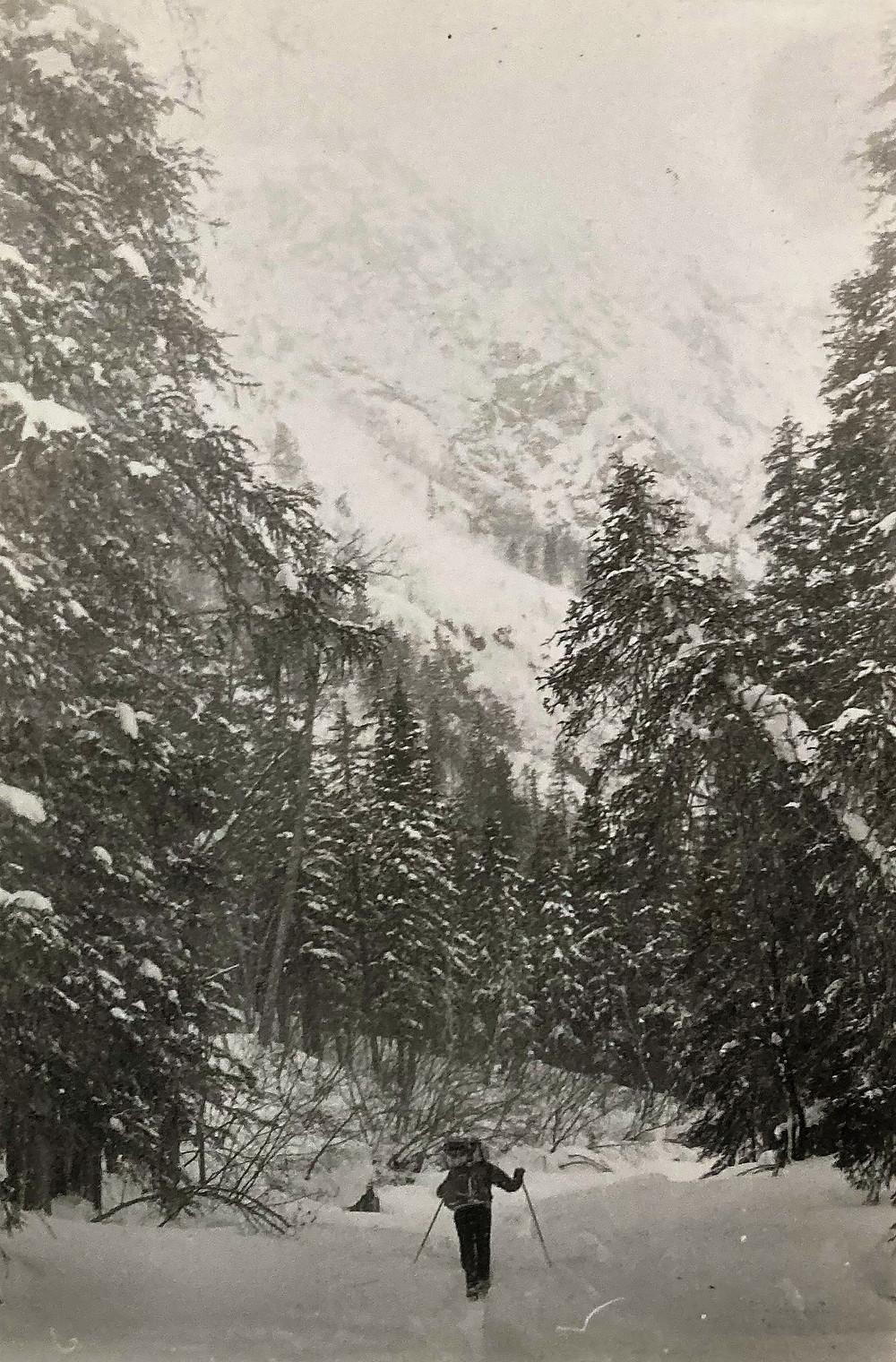 Тайга| skitour.club| Блог Сергея Чеботова