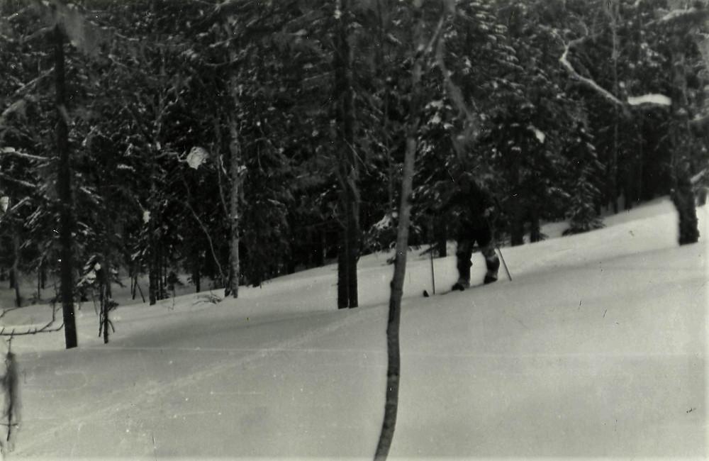 Граница леса| skitour.club| Блог Сергея Чеботова