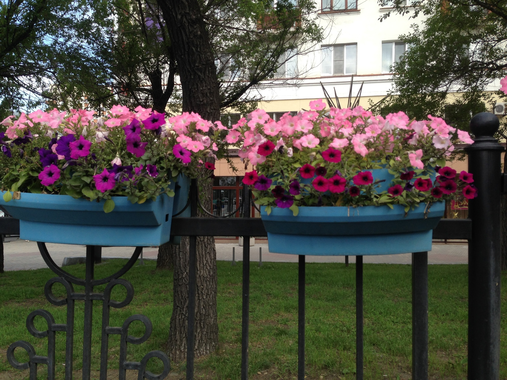Flowers on the street