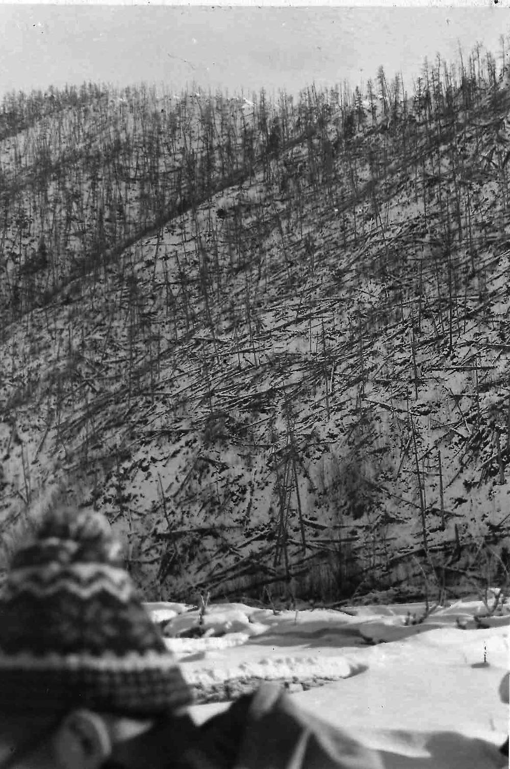 Поваленный лес  skitour.club  Блог Сергея Чеботова