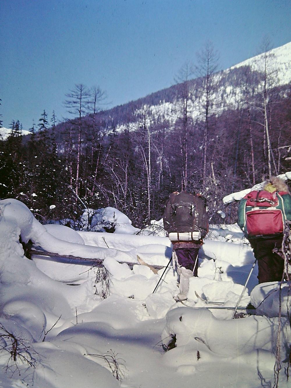 Бурелом у устье р. Талиджак| skitour.club| Блог Сергея Чеботова