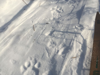 Winter is the best time for tiger tracking