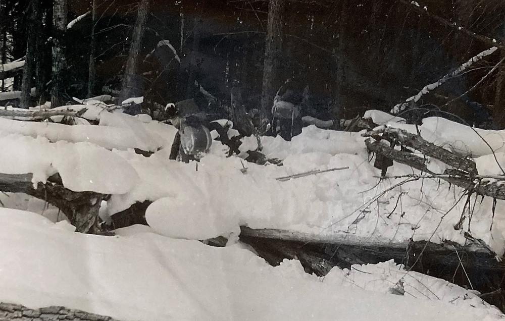 Бурелом| skitour.club| Блог Сергея Чеботова