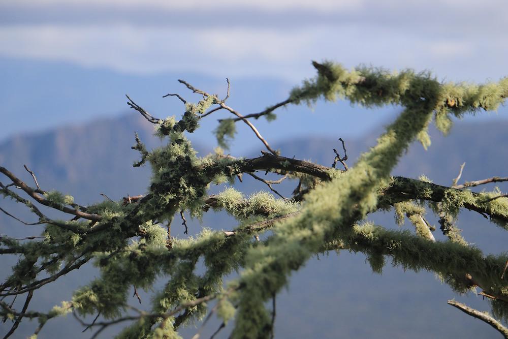 Mount William plant life
