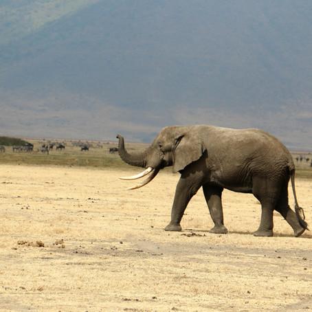 Сафари, Танзания