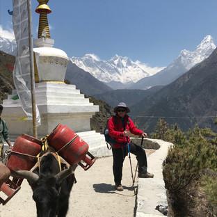 Як, ступа и Эверест - символы Гималаев.