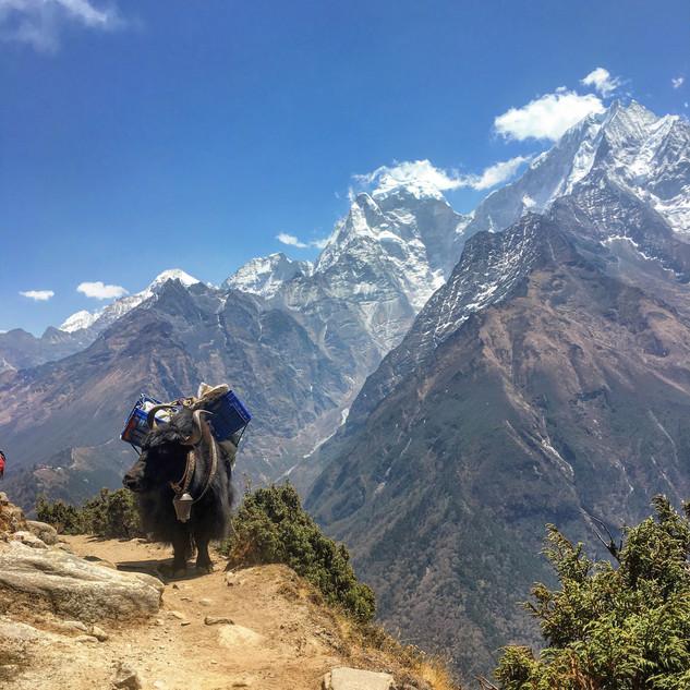 Як на фоне снежных гор, это символ Непала.