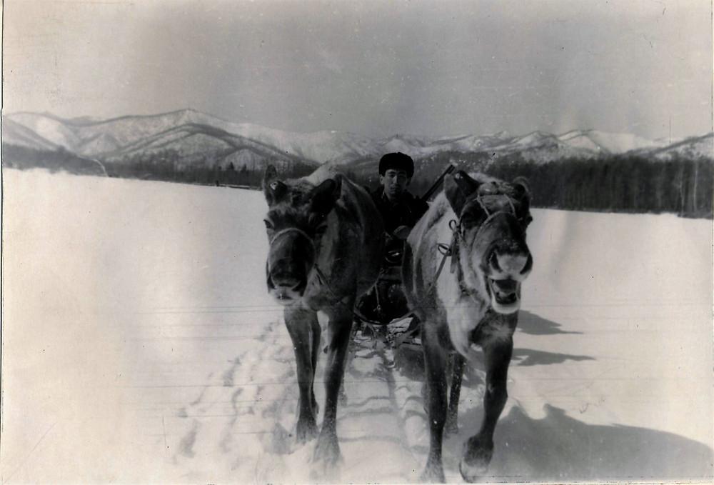 Езда на оленьей упряжке| skitour.club| Блог Сергея Чеботова