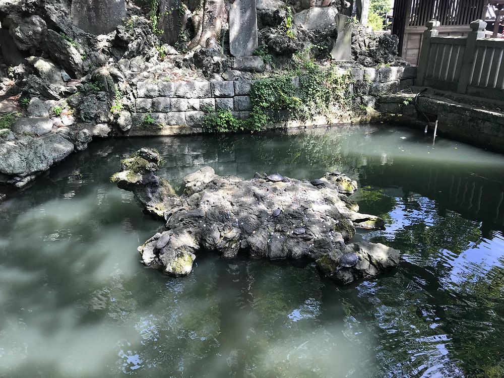 Каменная черепаха.