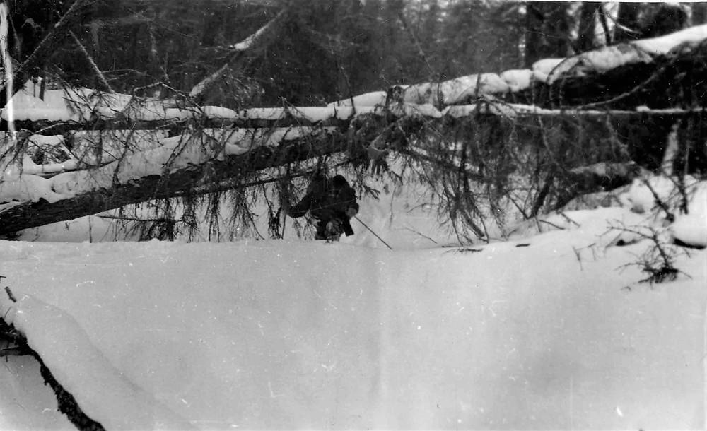 Завалы деревьев на реке| skitour.club| Блог Сергея Чеботова