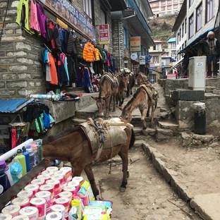 Караваны осликов так же на улицах Намче.