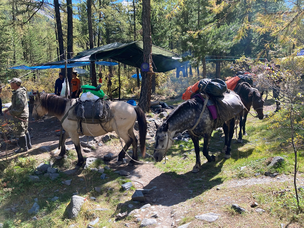 Караван лошадей| skitour.club| Блог Сергея Чеботова