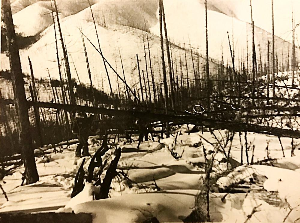 Бурелом на спуске — Туристический поход в район хребта Дуссе-Алинь 1986 год — Блог Сергея Чеботова