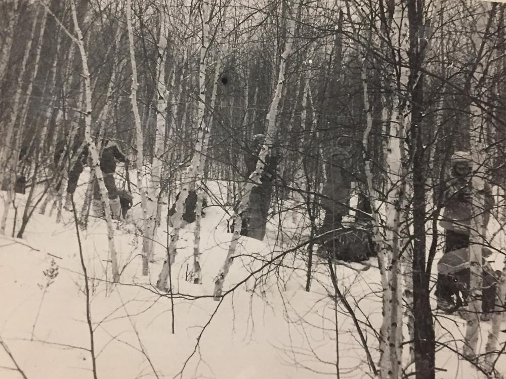 Березовый лес| skitour.club| Блог Сергея Чеботова