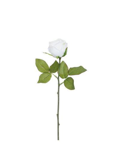 Vanishing Rose by Bojan