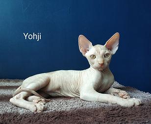 La mia Fiaba Yohji