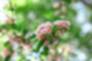 HANP_FS_390.jpg