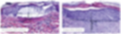 histology.png