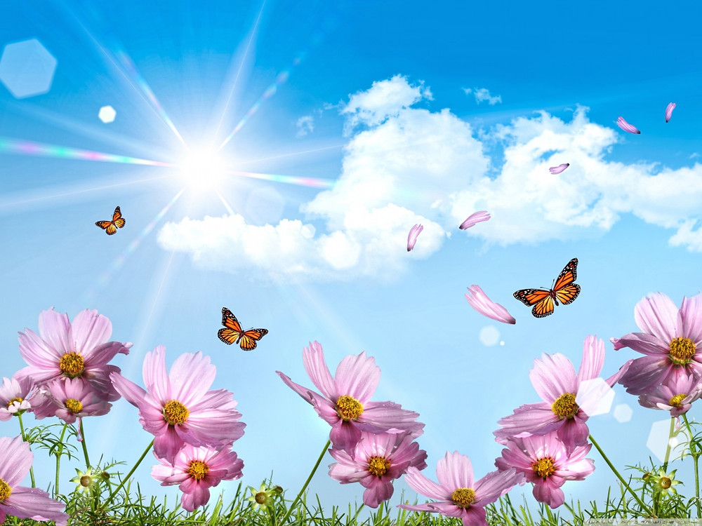 131116nature- wallpaper-butterflies-and-wild-flowers-in-the-sunshine.jpg