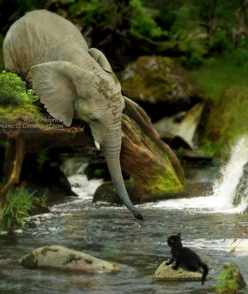 24.02.13-Help-from-Elephant.jpg