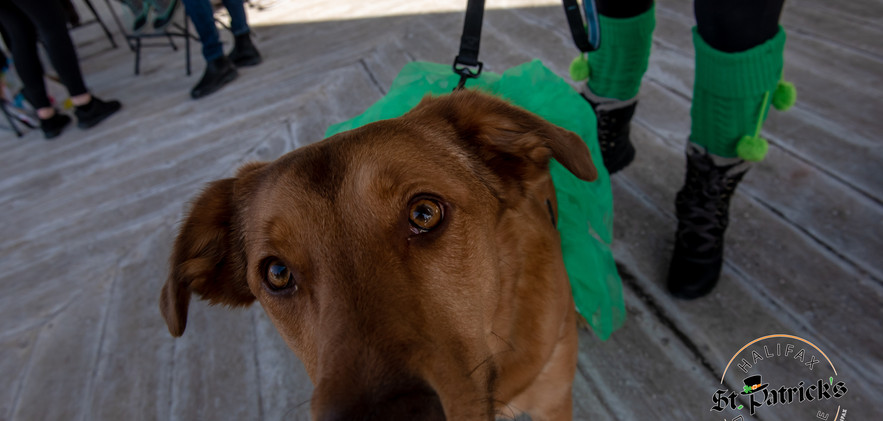 St Paddy's Day Parade 2019-18.jpg