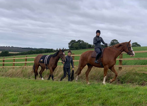 OSO Arabians UK Stud Tour 2020 | Day 3: Culworth Grounds, Northamptonshire UK