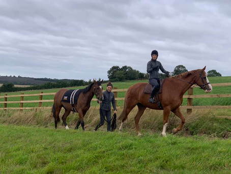 OSO Arabians UK Stud Tour 2020 | Day 3: Culworth Grounds, Northamptonshire UK