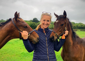 OSO Arabians UK Stud Tour 2020   Day 5 (Pt 2): Chapel Stud (Th'bred) Bransford, Worcestershire