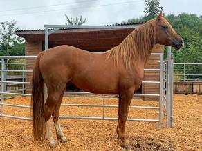OSO Arabians UK Stud Tour 2020 | Day 5 (Pt 1): Whitton Park Arabians, Ludlow Shropshire UK