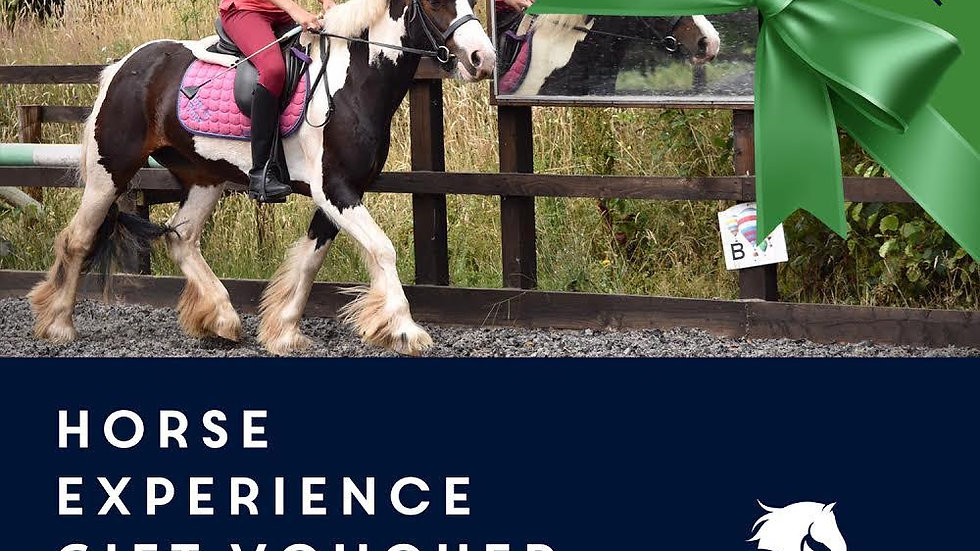 Horse Experience