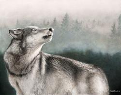 Wolf_by_schmoopy.jpg