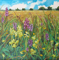 Early purple orchids, cowslips, Minchinhampton Common