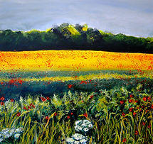 Poppies, summer meadow, cotswold field